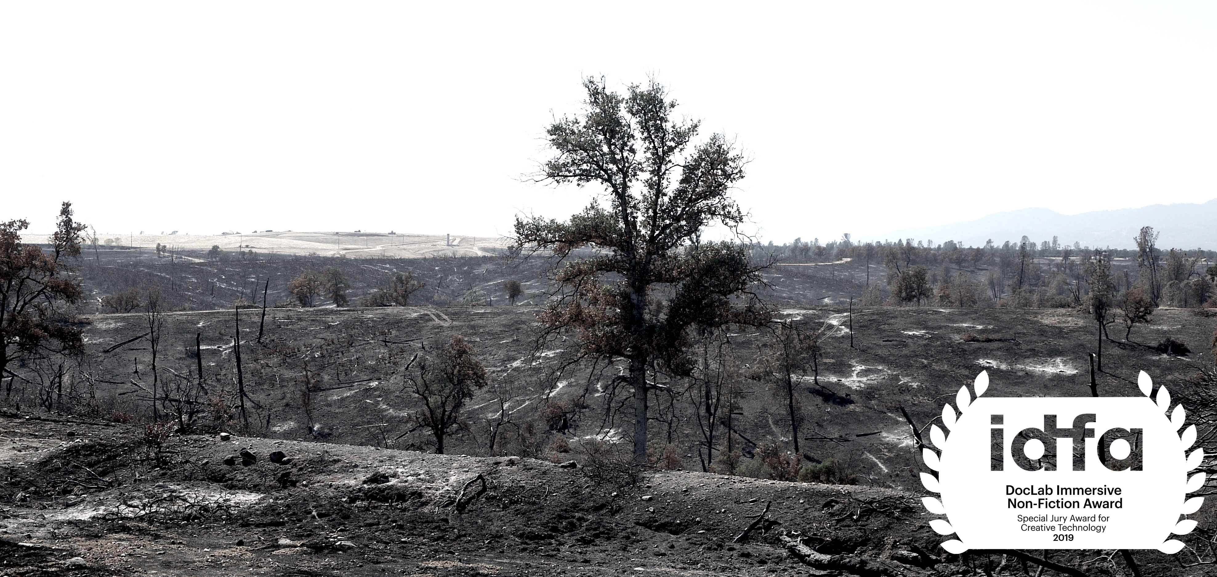 Black and white photograph of scrub land after forest fire. A single tree stands in the centre.